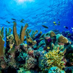 UCF Associate Professor John Fauth and a team of international researchers in 2015 published a study that showed the ingredient oxybenzone disrupted coral reproduction and caused bleaching.
