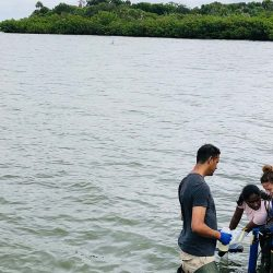 researchers in the Indian River Lagoon